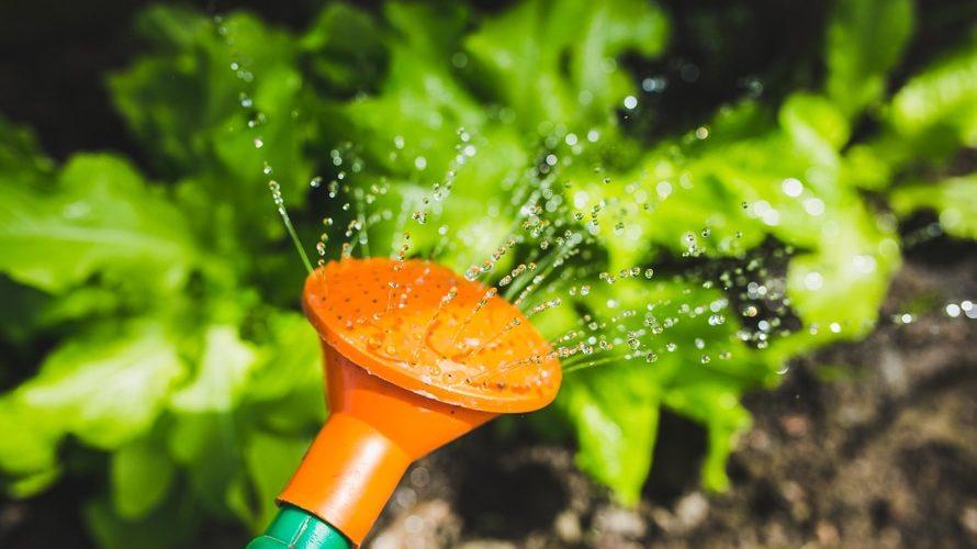 buccini-pollin-group-supports-community-garden
